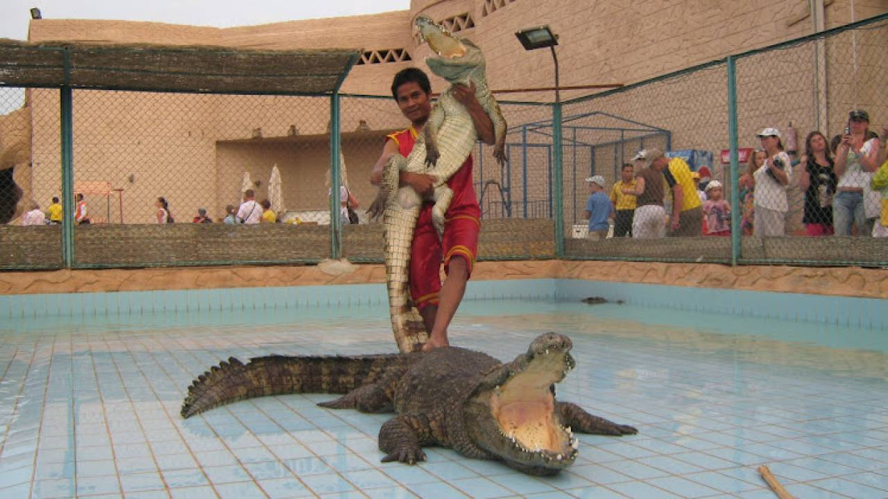 Crocodile and Snake Show Excursion in Sharm El Sheikh