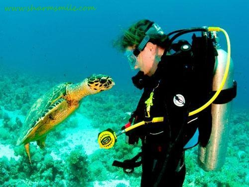 Introductory Scuba Diving for Beginners in Sharm El Sheikh