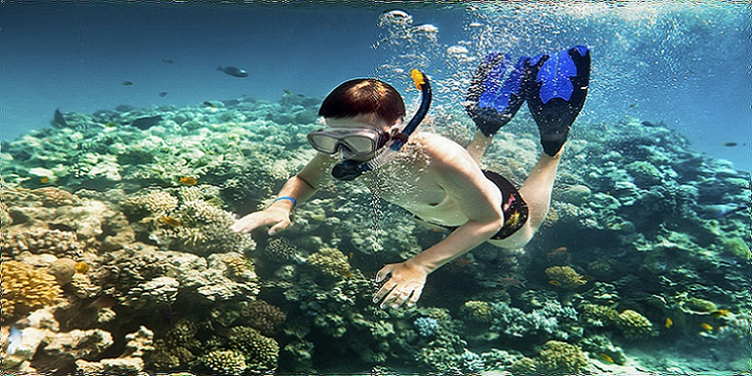 Half Day Snorkeling Boat Tour from Sharm El Sheikh Cruise Port