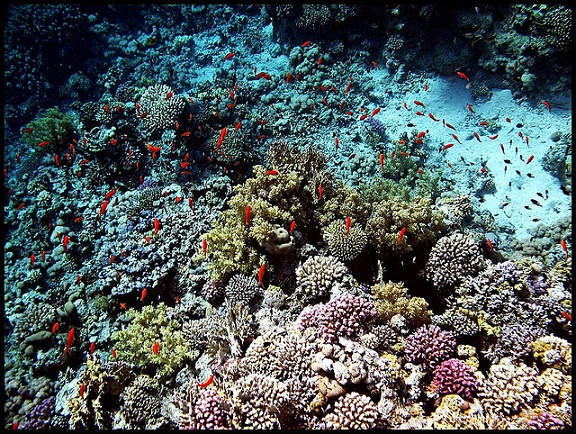 Beautiful corals of Red Sea - Sharm El Sheikh