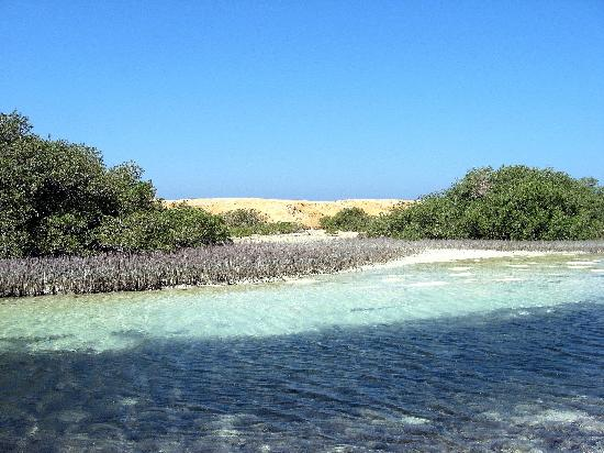 Canal of Mangroves - National Park of Ras Mohamed