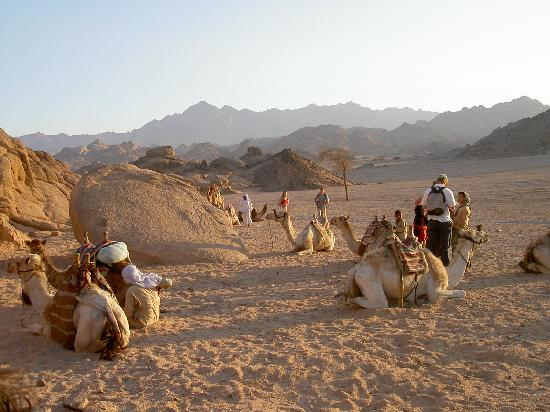 Camel Riding Sharm El Sheikh Desert