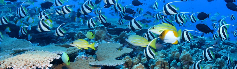 Semi Submarine Reef Tour - Sharm El Sheikh