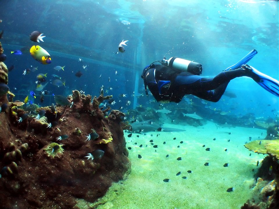 Sharm El Sheikh Best Dive Sites | Red Sea